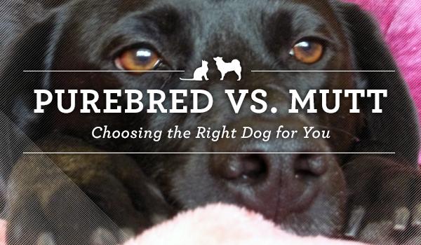 purebred-vs-mutt1