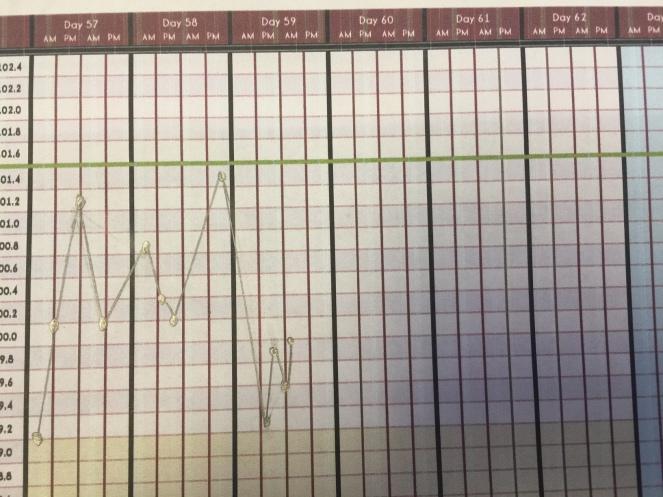 pregnant great dane temperature chart, pregnant great dane whelping temperature chart, pregnant dog whelping temperatures
